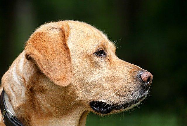 Hondenoppas Alkmaar