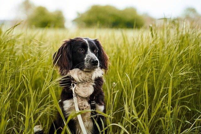 Hondenpension Noord Holland